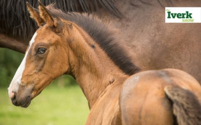 Mare and Foal Championship Returns