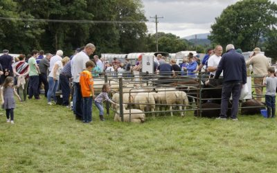 Iverk Sheep Classes