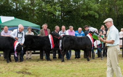 Massive Prize Fund for Cattle Classes
