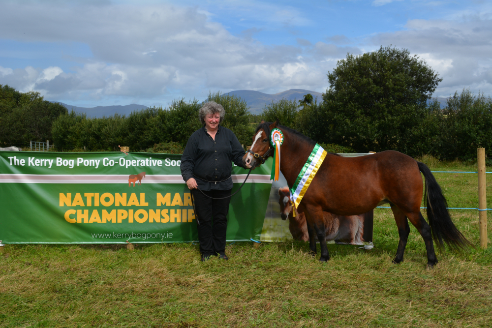 Two More Firsts in Horse Classes
